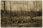 Derrière les lignes - Juin 1915
