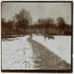 Bois de Cheppy - 1916