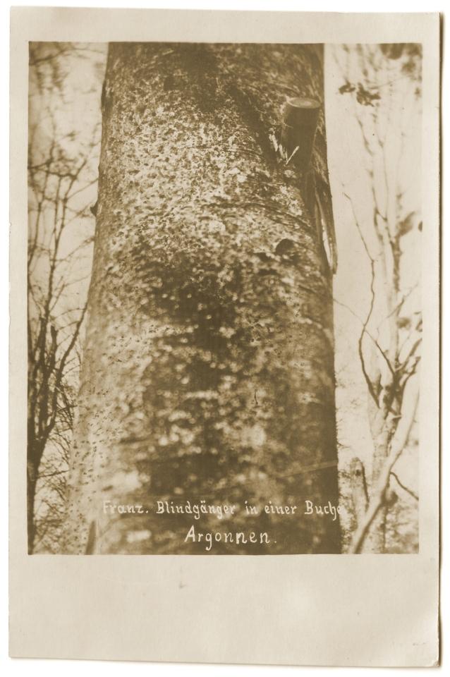Obus français planté dans un arbre