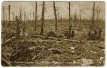 Souvenir des combats en Forêt d'Argonne en 1915