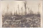 Tranchées allemandes en forêt d'Argonne